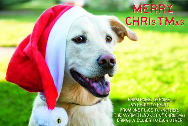 holiday greetings pet card / dog photographer CT