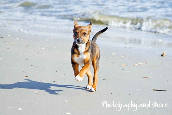 beach / pet photography