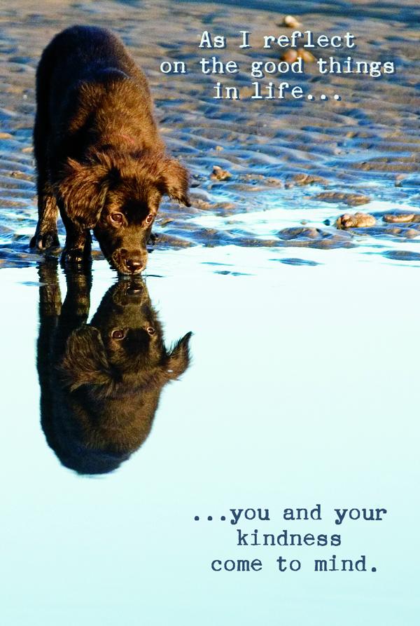 generic pet postcard / ct pet photographer