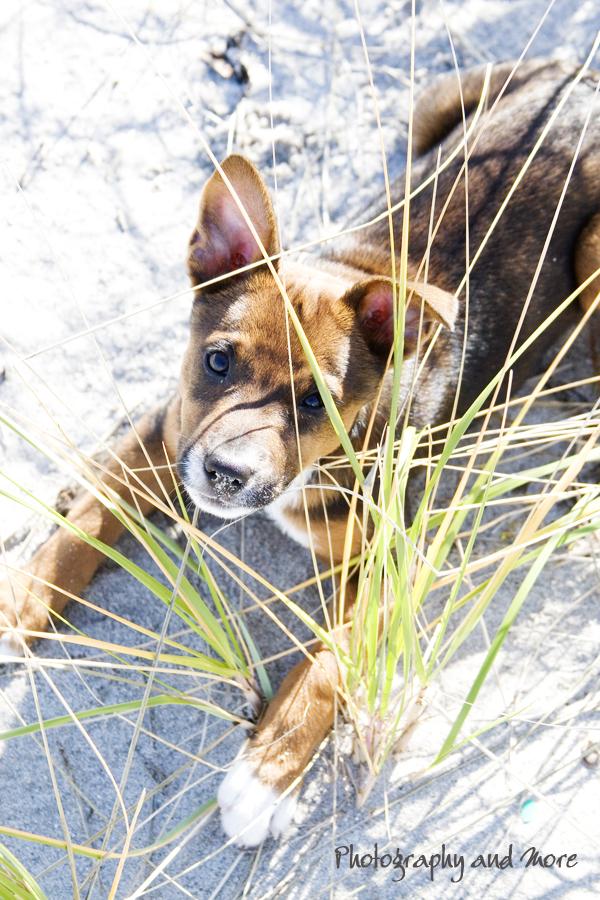 puppy hiding / dog photographer CT