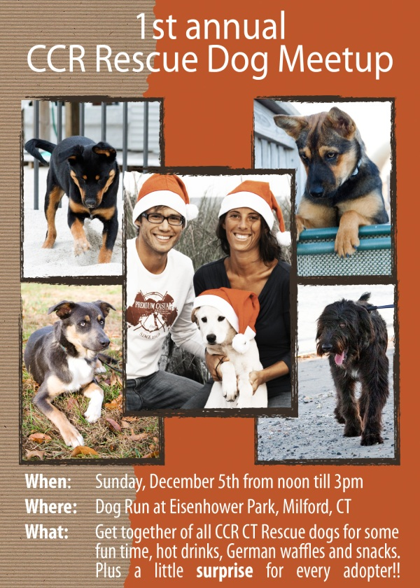 INVITATION dog networking event / pet photographer Milford CT
