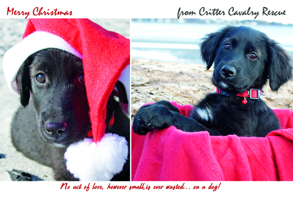 Puppy Lindsay christmas card / pet photography CT