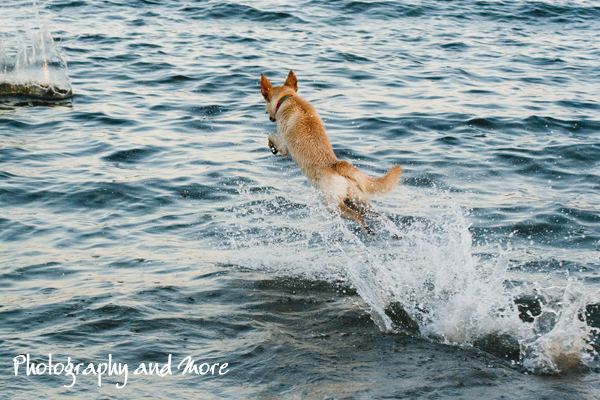 Jumping / pet photography CT