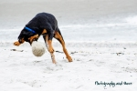 Peppino goofing off on the beach / CT pet photographer