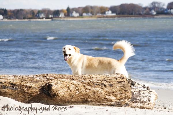 come on - vamos a la playa / pet photographer Milford, CT