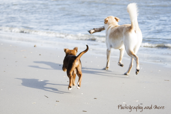 beach walk / CT pet photographer