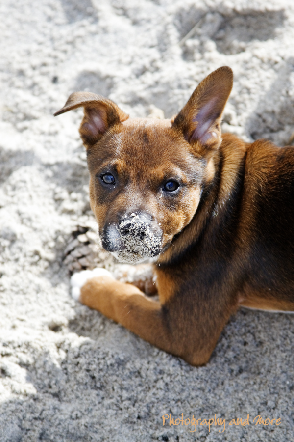 sandy nose/ pet photography