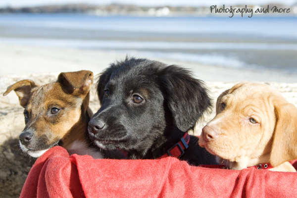 snuggl pupps / puppy photographer CT