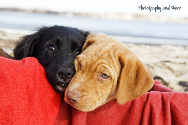 black and white puppies  / CT pet photographer