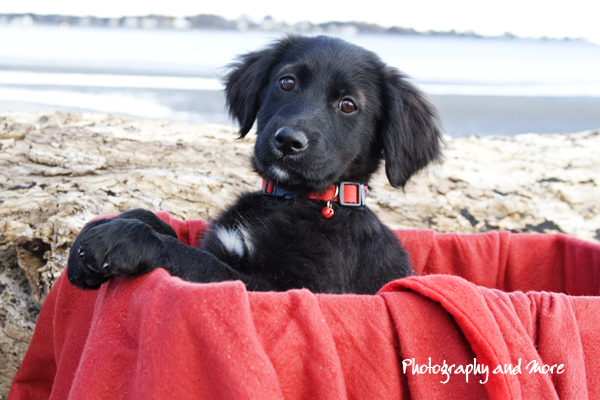 Puppy in box / CT pet photographer