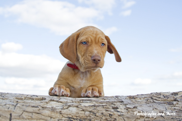 Puppy exploring the beach / pet photographer CT