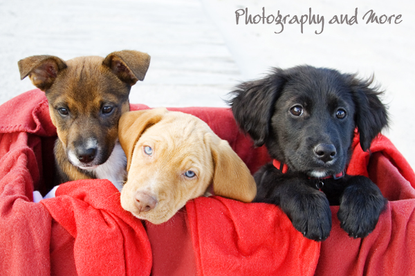 Puppies snuggling / ct pet photographer
