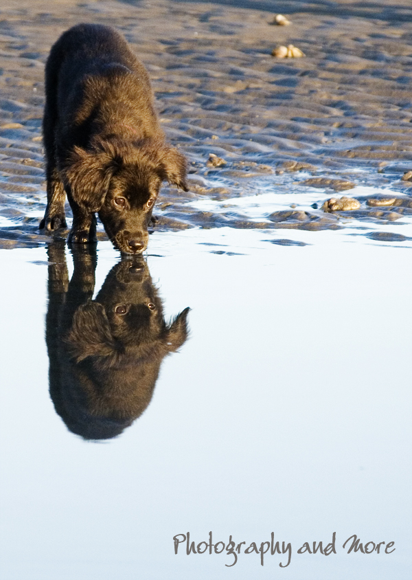 Afternoon reflection of puppy / dog photographer CT