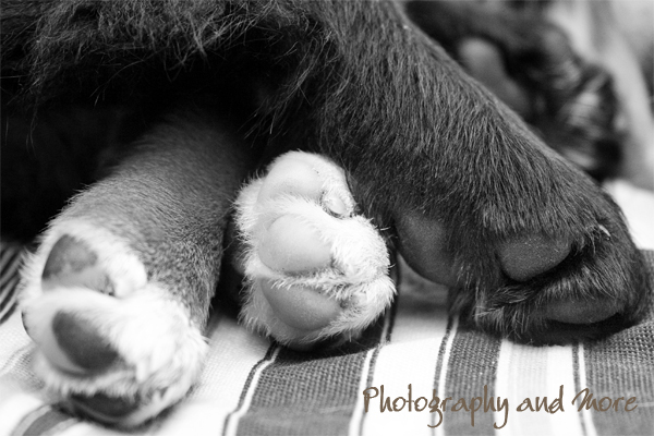 puppy paws / CT pet photographer
