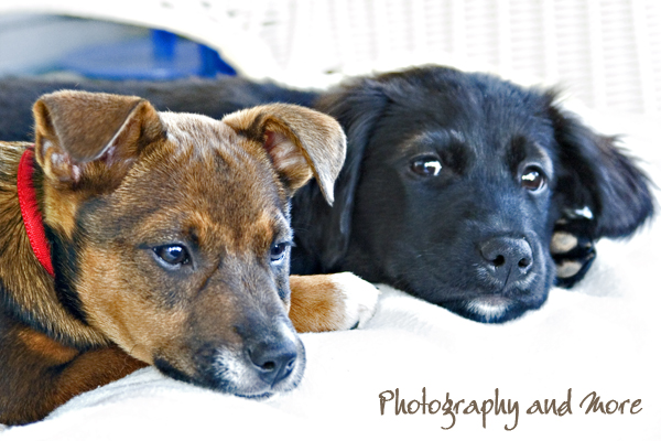 snuggle bugs / CT puppy photographer