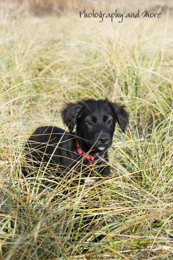 black puppy in gras / CT pet photographer