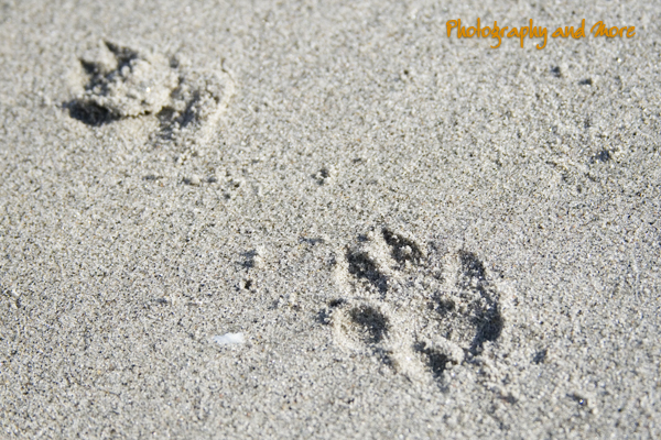 paw print close up / ct dog photography