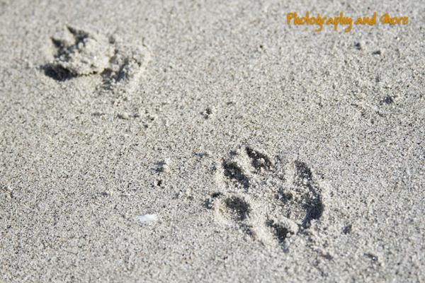 paw print close up / ct dog photography