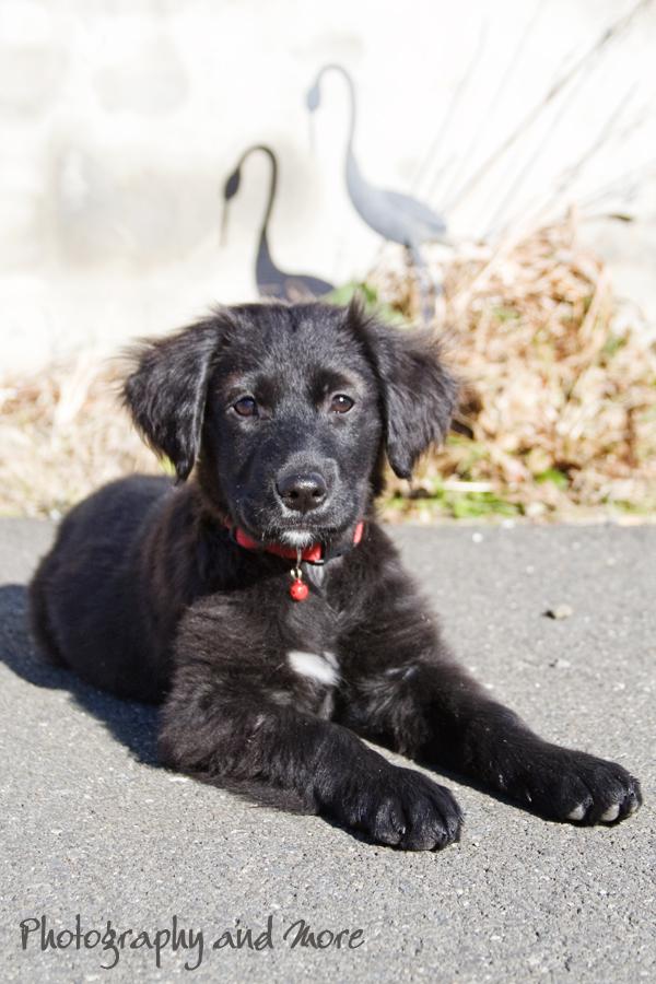 Puppy and bird / CT pet photographer