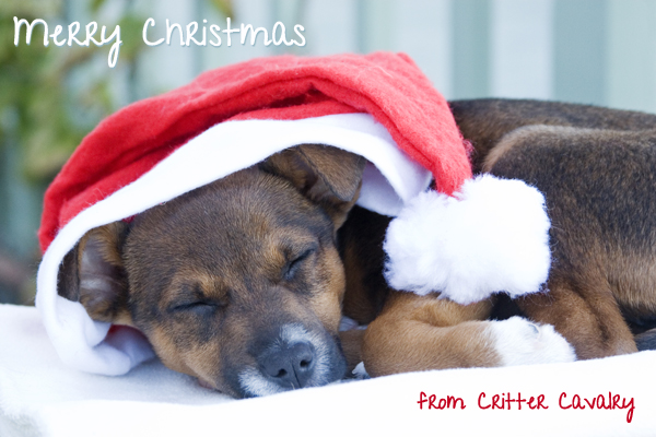 Critter Cavalry Christmas card with dog / christmas card photo
