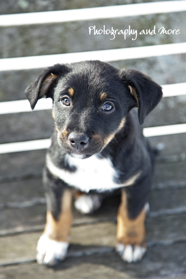 Puppy Tobi photograph CT - CT pet photographer