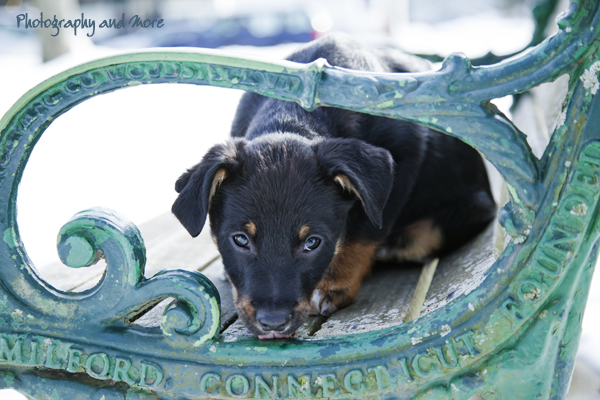 Puppy taking a peak - Milford, CT dog photographer