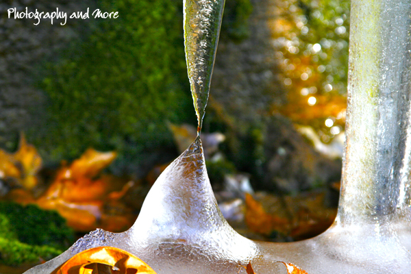 ice and leaves - Photography and More CT