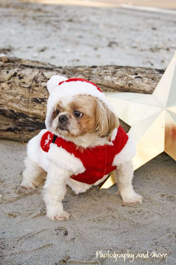 Coco on the beach / CT pet photographer