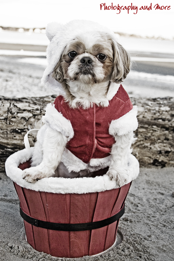 Old time pet photo / CT dog photographer