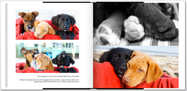 inside the puppy photo book