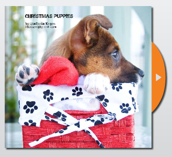 Elvis in a box - christmas dog photography CT