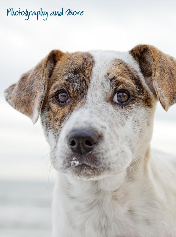 Puppy Flocke Portrait / dog lifestyle photography Connecticut