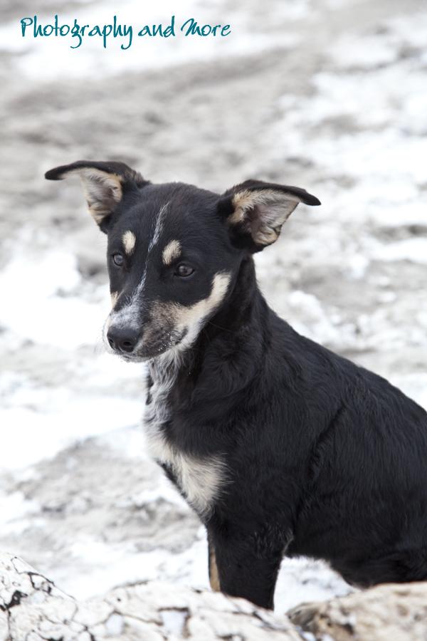 Puppy Socks winter / CT pet portrait photography