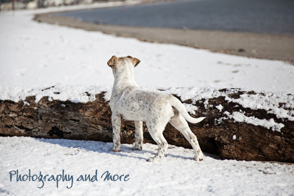 Puppy in snow in Milford / pet photographer in CT