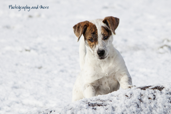 Puppy in afternoon light in the snow / CT pet photography
