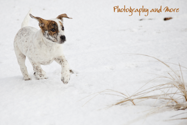 Puppy playing in the snow / Milford CT dog photographer