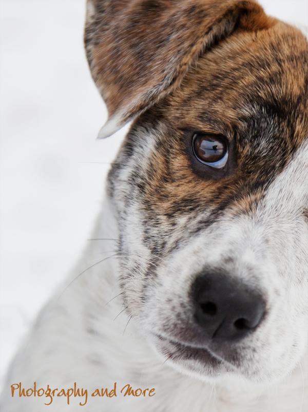 creative dog portrait / puppy photographer CT