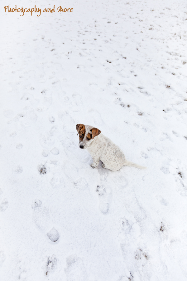Puppy in the snow / puppy photographer in Connecticut