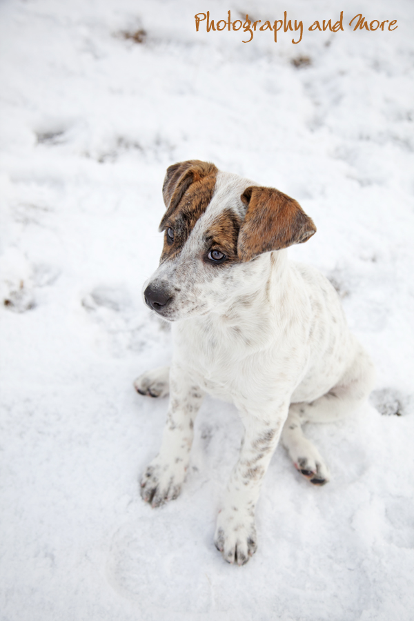 Puppy in the snow / CT pet photography
