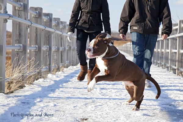 puppy jumping / CT pet photographer