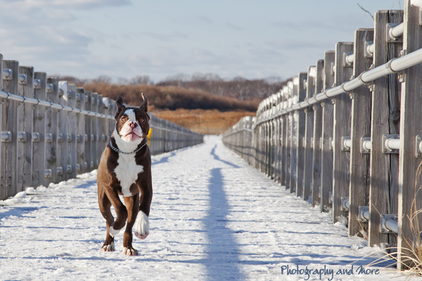 running puppy / pet action photographer CT
