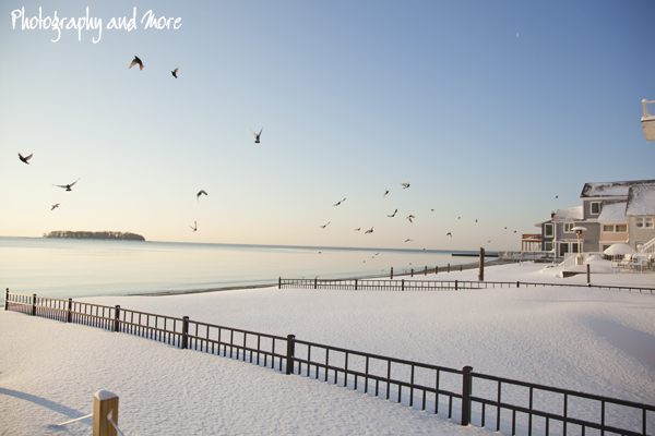 Birds on Silver Sands | Milford CT Photographer