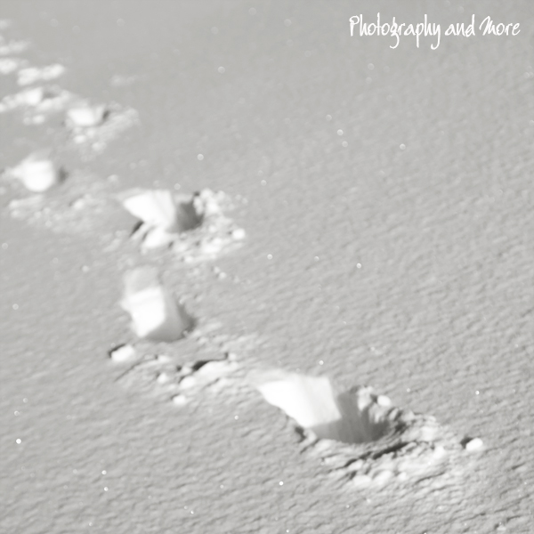 Footprints | Winter fine art photography Milford CT