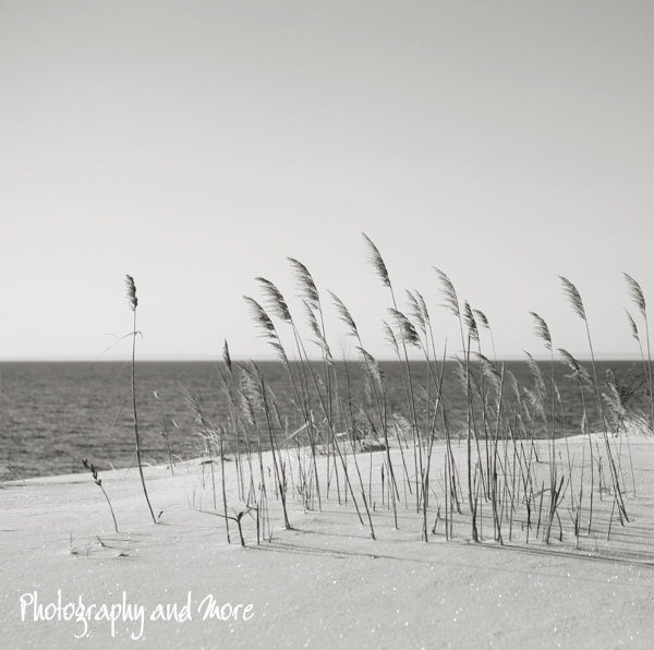 Sea Gras | Milford winter photography fine art