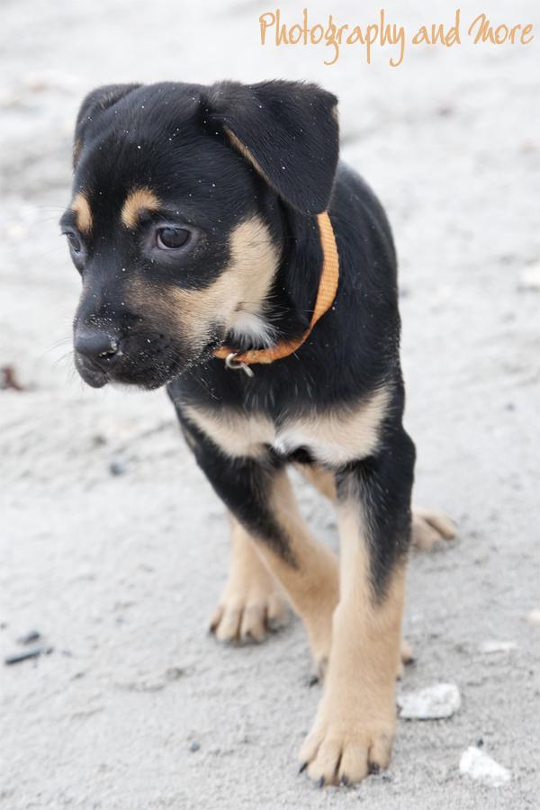 Puppy Merilee | CT pet photographer
