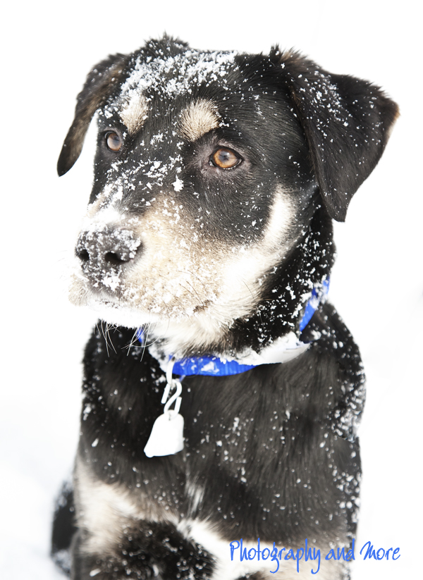 First snow for puppy | CT pet photographer