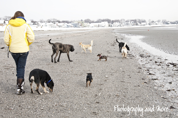 Walking all our fosters | CT dog photographer