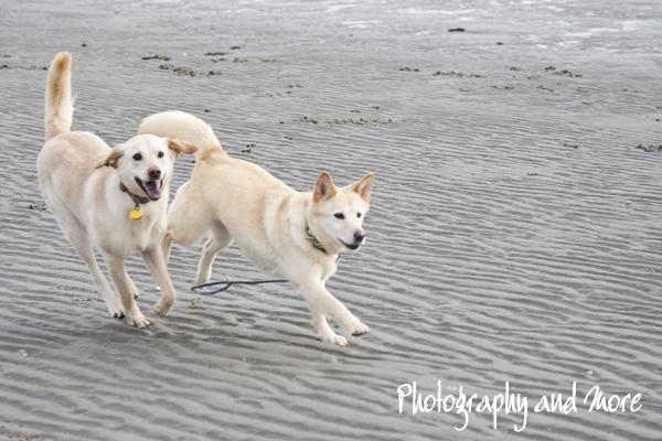 Zazu and Ziva | CT pet photographer