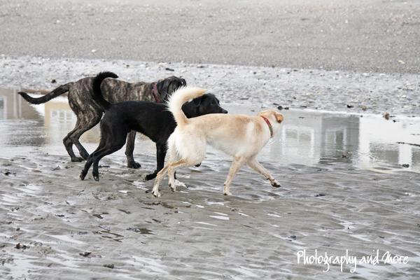 dog friendship | CT pet photographer