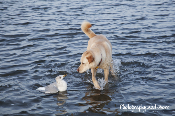 Bird and dog | CT pet photographer